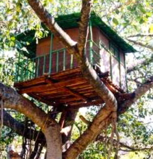 Random Tree House - Med